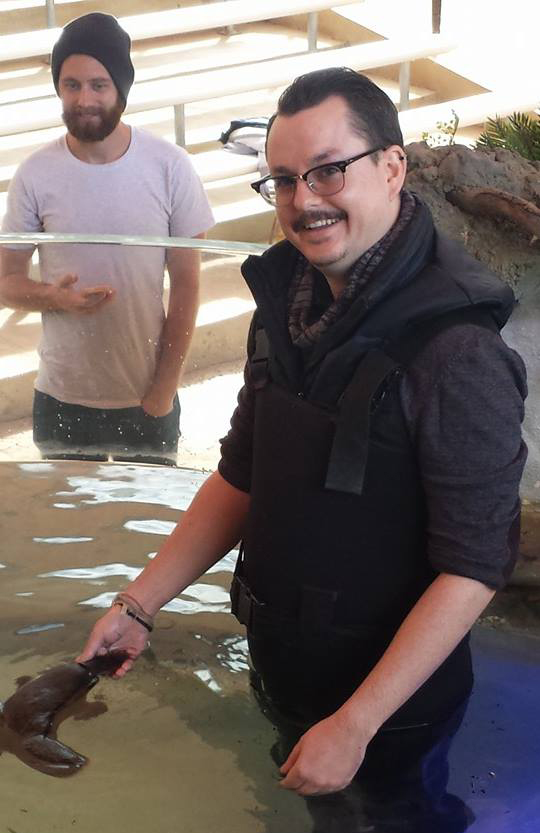 Wading with a platypus at Healesville Sanctuary